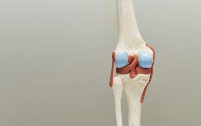 Cartilagine: impariamo a conoscerla